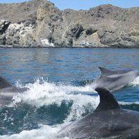 Avistamiento de ballenas y delfines en el Parque Nacional Pan de Azúcar