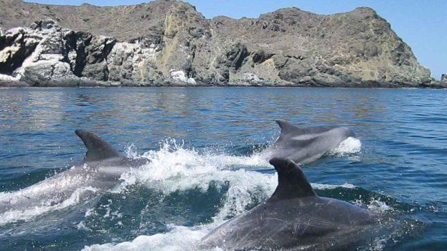 Delfines en Atacama