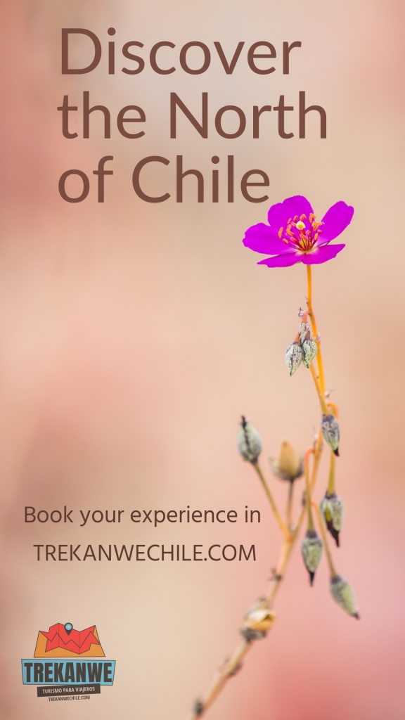 Discover the north of Chile - Trekanwechile.com. flower