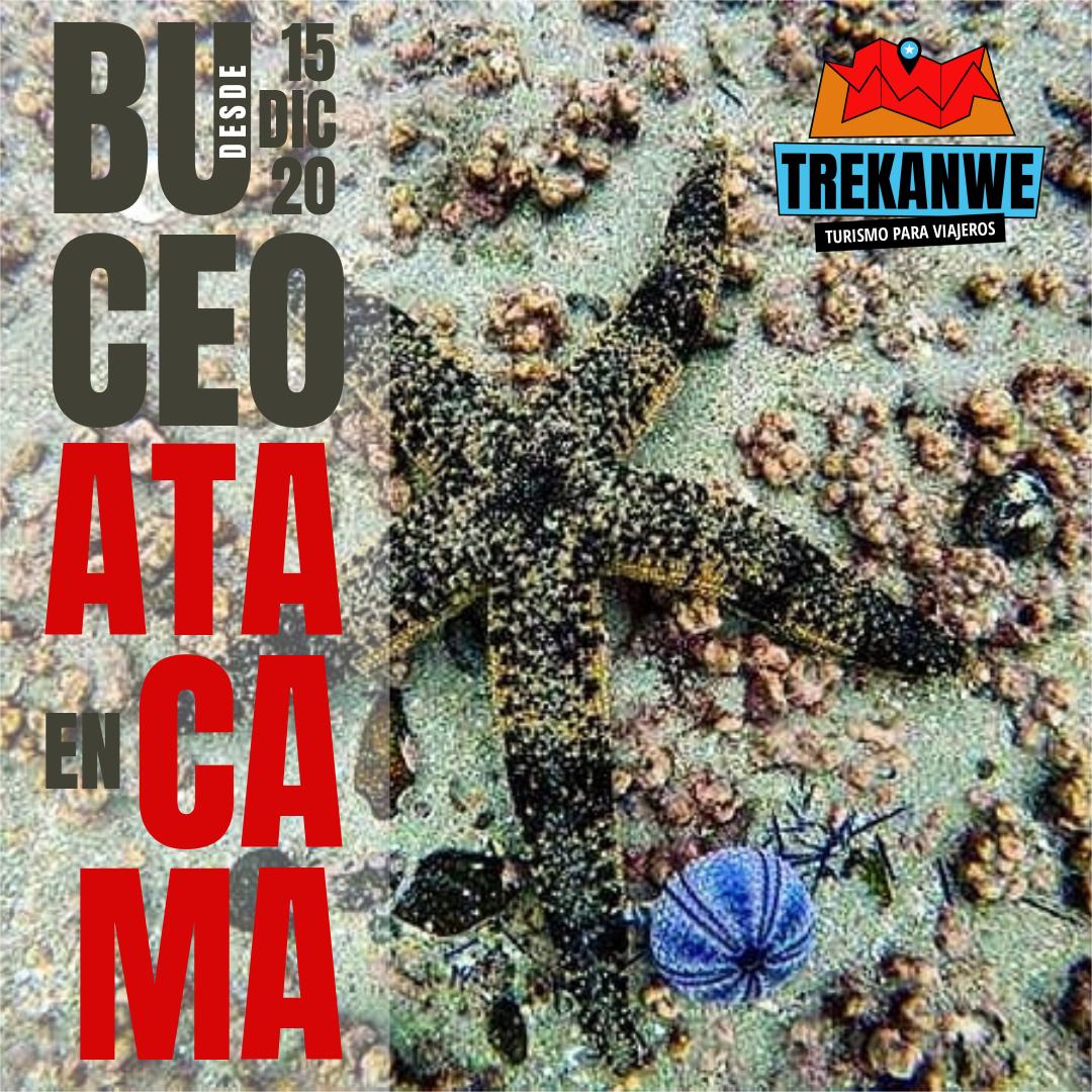 BUCEO EN ATACAMA - TREKANWE CHILE